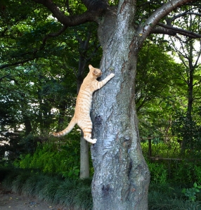 Cat_climbing_tree,_Uchimaki_Park